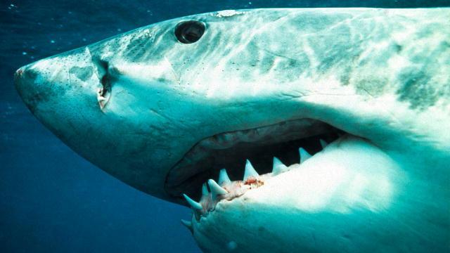MythBusters on Shark Myths | Shark Week | Discovery