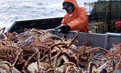 crab-fishing-101-king-crab-250x150