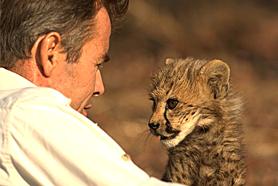 man-cheetah-wild-278x186
