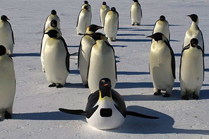 penguins-waddle-all-the-way-300x200