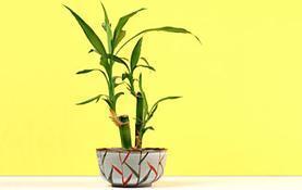 plants-have-feelings0-1
