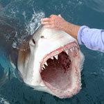strength-of-shark-bite-ch150