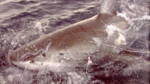 Killer Sharks Videos Shark Videos | Shark Week
