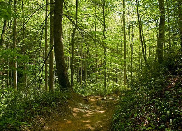 north-america-pisgah-national-forest-625x450