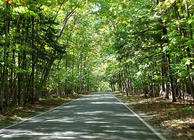 top-10-motorcycle-rides-4-tunnel-of-trees-625x450