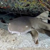 top-10-quirkiest-sharks1