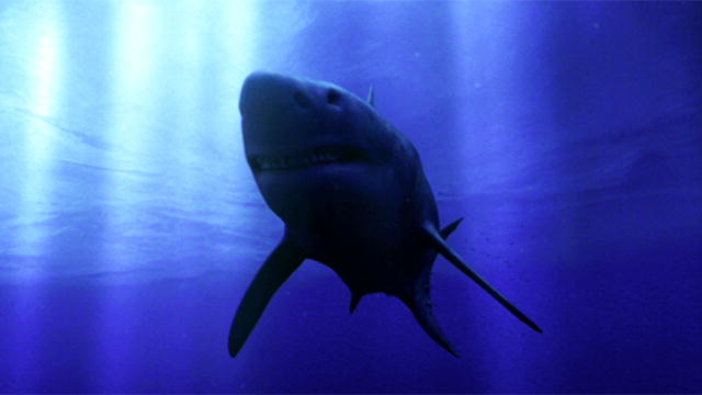 Megalodon: The Monster Shark Lives | Monster Week | Animal ... | 640 x 360 jpeg 18kB