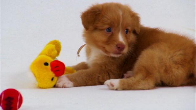 Dogs 101 – Puppies 101 | Dogs 101 | Animal Planet