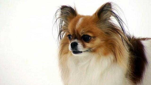 Mi-ki | Dogs 101 | Animal