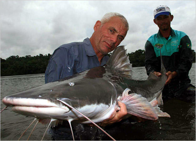 piraiba catfish photos river monsters animal planet