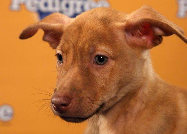 Puppy Bowl Presents The Dog Bowl