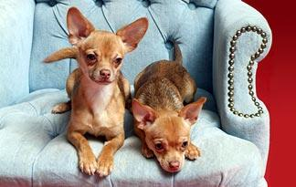 From Chihuahuas to Great Danes, Dogs 101 has got pups of all sizes covered.