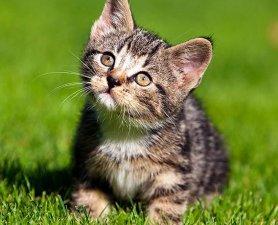 04-kitten-cuteness278-2