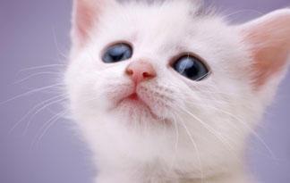 10-important-cat-health-questions3