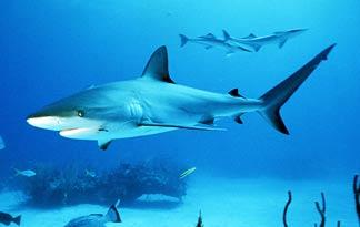 bull-shark-adventure-fishing0