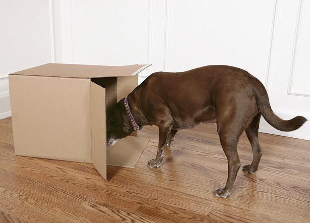 dog-seek0