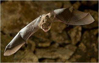fear-of-bats-chiroptophobia0