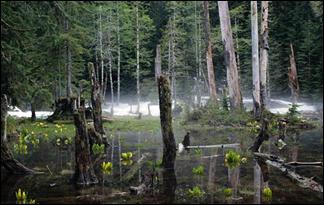 honey-island-swamp-monster0
