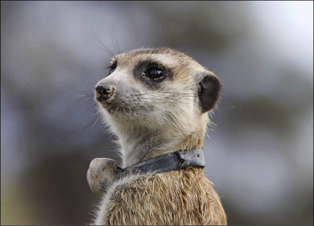 meerkat-family-maybelline0