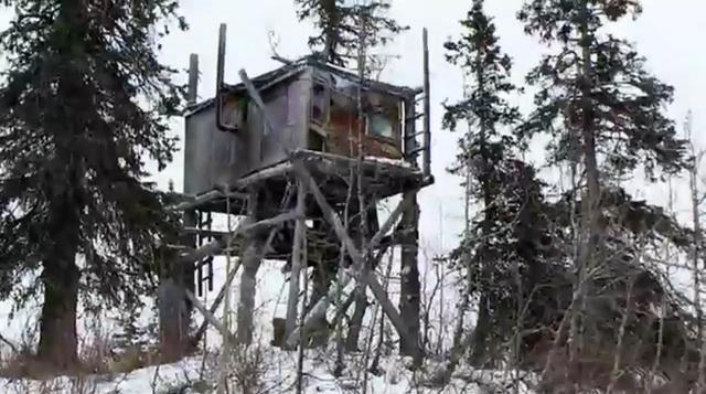 alaskan-treehouse