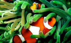 clownfish-little-debbie-2600w-250x150