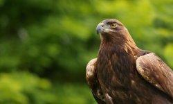 falcon-little-debbie-2600w-250x150