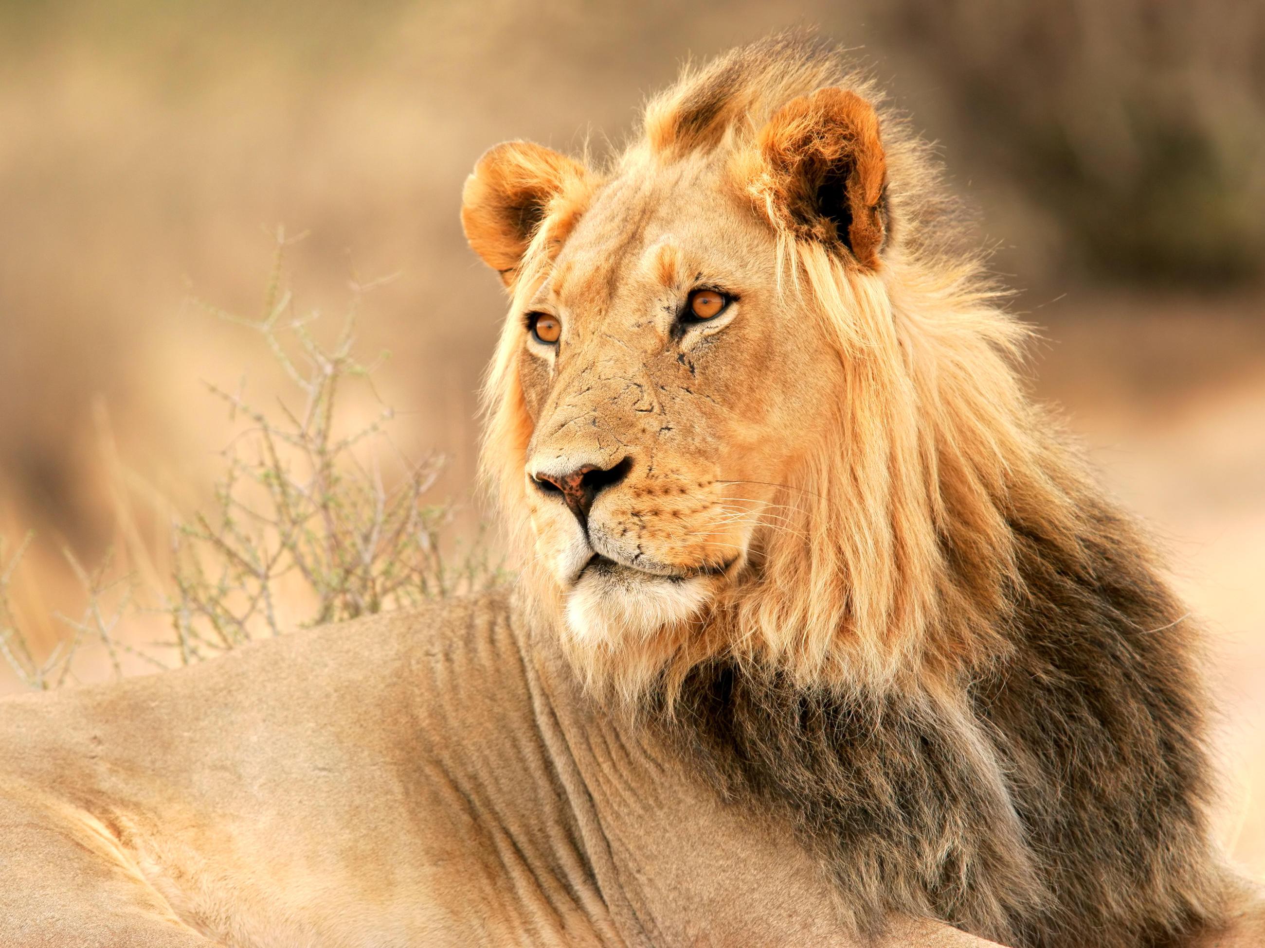 top 10 animals that are tvmovie stars animal planet