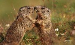 marmot-little-debbie-2600w-250x150