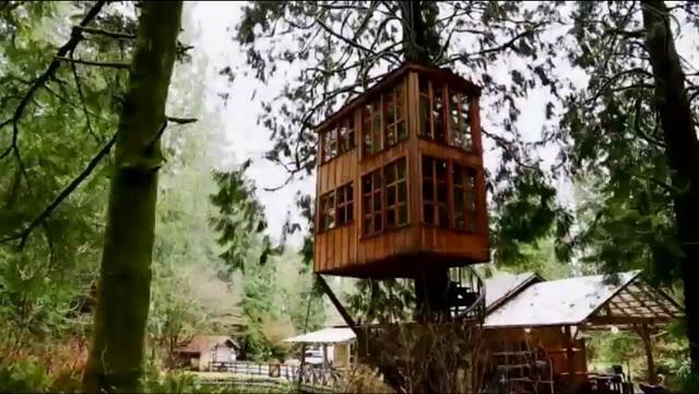 trillum-treehouse