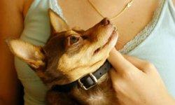 10 Small Dog Breeds for Therapy