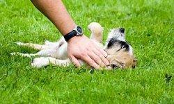 10 Small Dog Training Tips