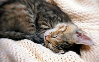 10-tips-for-bringing-a-new-kitten-home2