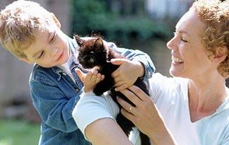 10-tips-for-bringing-a-new-kitten-home3