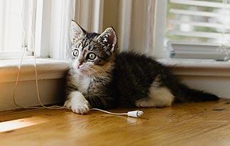 10-tips-for-bringing-a-new-kitten-home4
