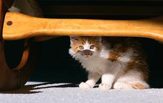 10-tips-for-bringing-a-new-kitten-home5