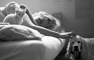 10-tips-for-bringing-a-new-kitten-home6