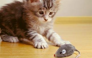 10-tips-for-bringing-a-new-kitten-home7