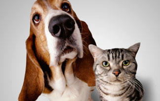 10-tips-for-bringing-dogs-and-cats-together0