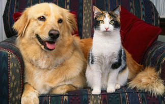 10-tips-for-bringing-dogs-and-cats-together2