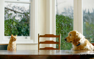 10-tips-for-bringing-dogs-and-cats-together3