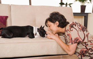 5-boston-terrier-facts3