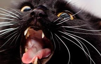 5-crazy-cat-anatomy-facts5