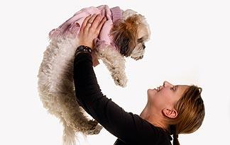5 Important Health Tips For Shih Tzus Small Dogs Animal Planet