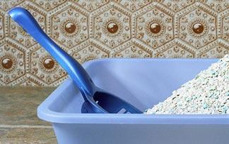 5-litter-box-training-tips0
