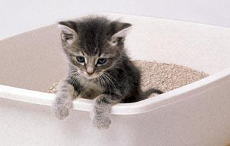 5-litter-box-training-tips1