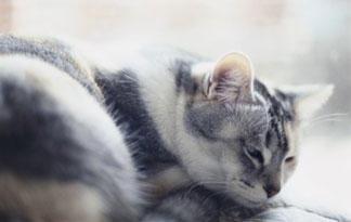 5-most-dangerous-cat-diseases1