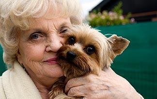 5-products-to-help-old-dogs3