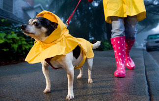5-rainy-day-dog-activities0