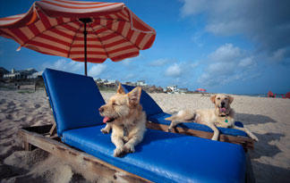 5-safety-tips-for-taking-dog-to-the-beach1