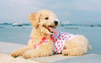 5-safety-tips-for-taking-dog-to-the-beach3